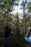 ZNP, Cuban Bare-legged Owl nest tree