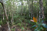 Bird Survey Site, Zapata Nat. Park