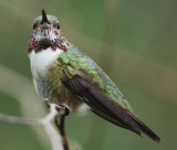 Louisiana Hummingbird Photographs