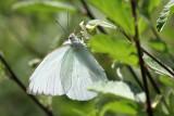 Butterfly, Cameron Parish, 4/21/12