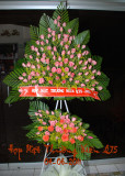 Hop Mat Thuong Nien Q75  04 - 06 - 2011