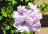 san_diego_botanic_gardens
