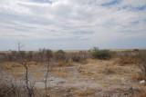AT ETOSHA
