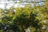 20120510155602Swasiland_Hazyview00064.jpg