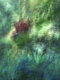 GALLERY:: Visual Adventures In Monet's Garden - Giverny, France - June 2012