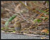 Sparrow Workshop