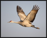 Crane flyby
