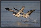 Crane takeoff
