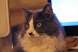 Mitsie at 50mm
