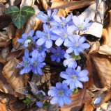 April hiking 003web.jpg