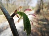 April hiking 011web.jpg