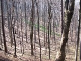 April hiking 014web.jpg