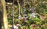 April hiking 023web.jpg