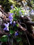 April hiking 024web.jpg