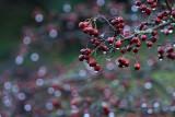 berry wet