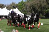 Live Oak Farms Carriage Show