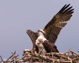 Junior, you're beginning to get on my nerves!!.  Stop flashing that wing around or you'll be grounded...