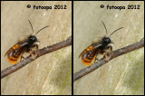insects_2012