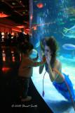 Mesmerized by a Mermaid 3506