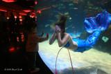 Peek a Boo Mermaid 3509