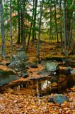 Swirling leaves, landscape