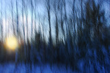 In a blue forest 1