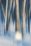 Winter trees are dreaming 2