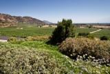 Haras de Pirque Winery (2)