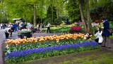 Keukenhof Gardens (7)