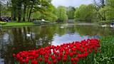 Keukenhof Gardens (1)