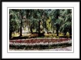a park in Krakow....