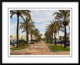 Palms at Benalmadena Marina, Spain...