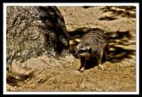 playing hide n seek...