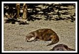 I love to doze in the sun...