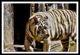 such a wonderful animal...