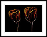 neon tulips...