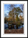 a pretty duck pond...