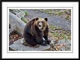 smiling bear...