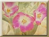 pink n white tulips...