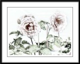 soft pink roses..