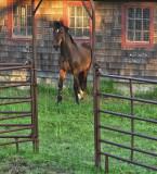 Furguson horse farm