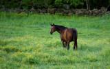 On the horse farm