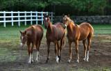 Morning on the horse farm.