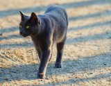 Farm cat on the prowl