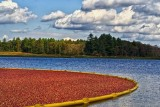 Autumn at the cranberry bog.