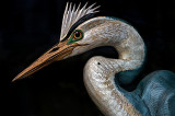 Old hand carved Great Blue Heron