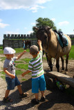 Children - their first contact with a horse