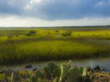 Coastal Grassland on Padre Island