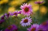 gallery : Flowers