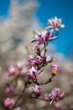 gallery :  Flowers in Verticals